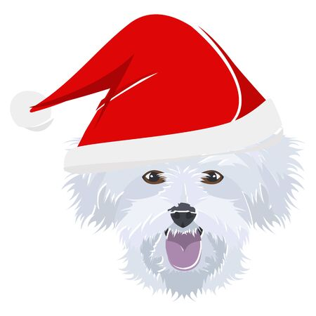 Maltese with Christmas hat - This cheerful dog is properly contemplative through his Santa hat. A Christmas motive for dog owners.