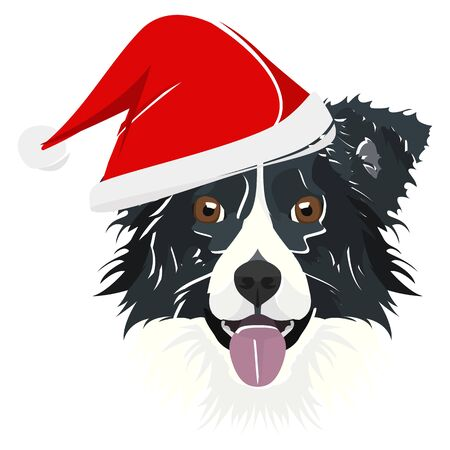 Border Collie with Santa Hat - This cheerful dog is properly contemplative through his Santa hat. A Christmas motive for dog owners.