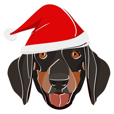 Dachshund with Santa hat - This cheerful dog is properly contemplative through his Santa hat. A Christmas motive for dog owners.