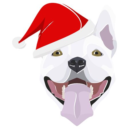 Bull Terrier with Santa Hat - This cheerful dog is properly contemplative through his Santa hat. A Christmas motive for dog owners.