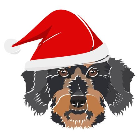 wire-haired dachshund with Santa Hat - This cheerful dog is properly contemplative through his Santa hat. A Christmas motive for dog owners.