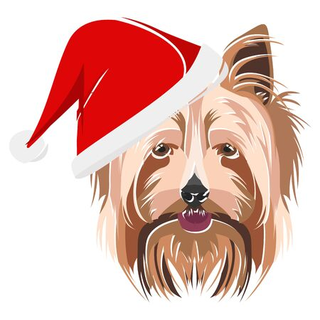 Yorkshire Terrier with Santa Hat - This cheerful dog is properly contemplative through his Santa hat. A Christmas motive for dog owners.