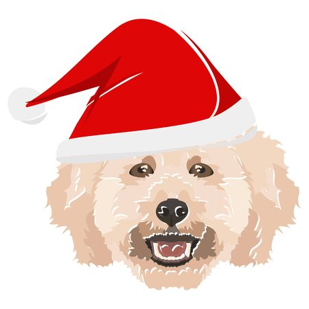 Poodle with Christmas hat - This cheerful dog is properly contemplative through his Santa hat. A Christmas motive for dog owners.