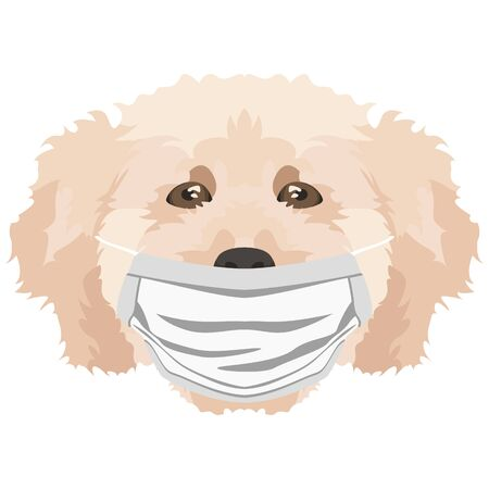 Illustration of a poodle with a respirator. At this time of the pandemic, the design is a nice graphic for fans of dogs. Archivio Fotografico - 145746761