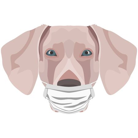 Illustration of a Weimaraner with a respirator. At this time of the pandemic, the design is a nice graphic for fans of dogs. Archivio Fotografico - 145746765