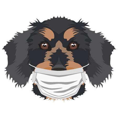 Illustration of a wire-haired dachshund with a respirator. At this time of the pandemic, the design is a nice graphic for fans of dogs. Archivio Fotografico - 145746775