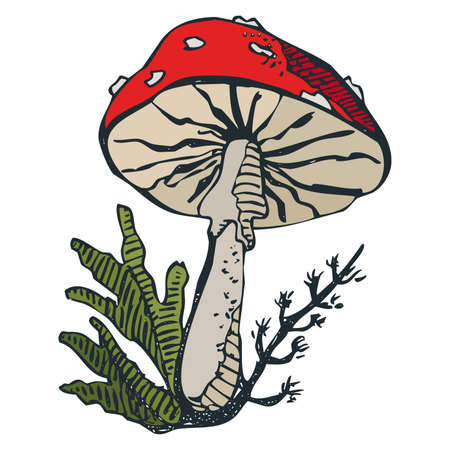 unhealthy hand drawn stylized colorful poisonous amanita mushroom drawing on white background.