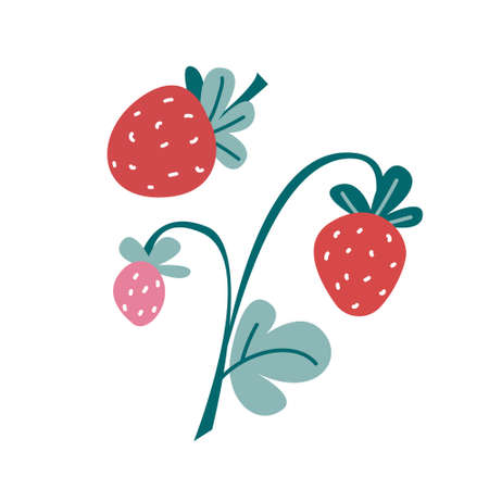 Strawberry with leaves and flowers. Ilustracje wektorowe