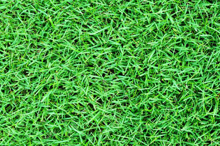 Green grass field background Stock Photo - 9393123