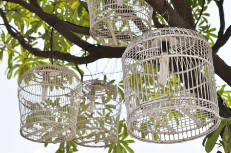 Decoration of light bulb in bird cage for gardening