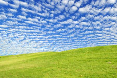 Green grass field and wonderful blue sky