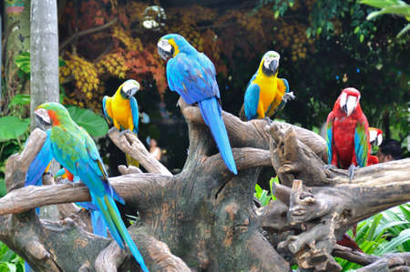 Group of colorful macaw