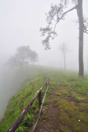 Cliff in pine forest cover with mist Stock Photo