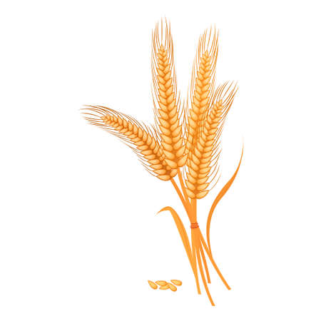 Granos maduros de trigo dorado que producen pan.