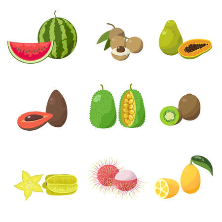 Tropical exotic fruits set. Various exotic fruits, coconuts, mangoes, bananas, avocados, kiwi, lychee.