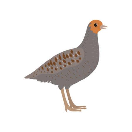 Beautiful multi-colored bird isolated on white background. Vector illustration isolated on white background.