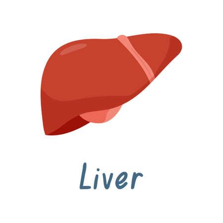 Órgano interno de hígado sano, Ilustración de vector de anatomía humana aislada sobre fondo blanco.