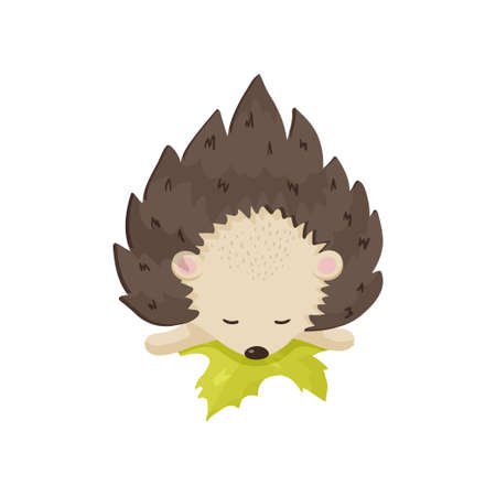 Little cute hedgehog cub sleeps, resting its head on a yellow leaf. Small animal is tired and has a rest. Close-up front view isolated on white background. Nice childish character poster