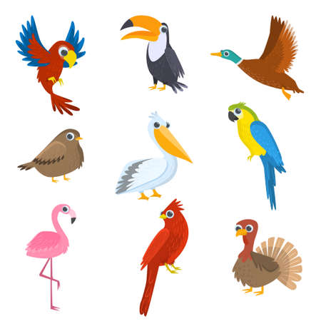 Set of various wild, domestic, tropical, waterfowl birds isolated on white background Illustration