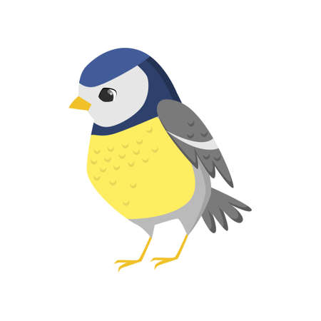 Flat cartoon character design on white background. Titmouse bird sits and looks forward. Ornithology thematic, teaching card. Wildlife fauna symbol.