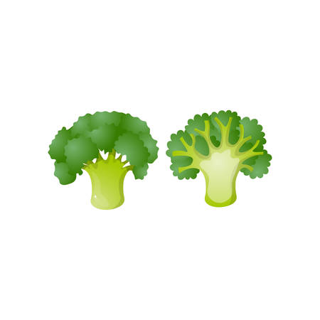 Colorful broccoli isolated on white background. Raw cauliflower cabbage. Ripe green vegetable with nutrition and vitamins, juicy fresh cooking ingredient. Autumn harvest, agricultural concept.