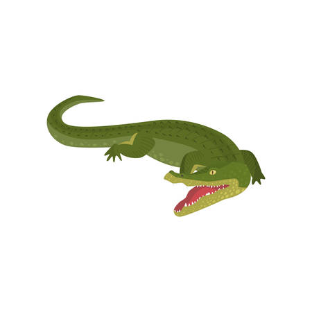 Realistic gavial crocodile with opened toothy mouth isolated on white background. Cartoon with rare animal south america. Teaching card. Zoo, natural concept Illustration