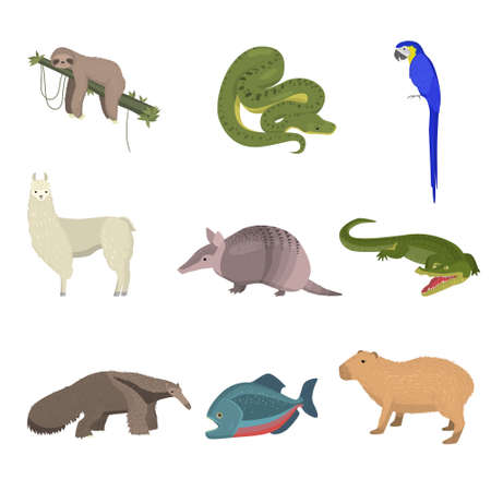 Set of rare wild animals and blue parrot. Sloth, desman, green snake boig, gavial crocodile, armadillo, lama, anteater, fish with transparent head isolated on white background. Teaching cards. Illustration