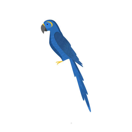 Blue macau parrot isolated on white background. Rare bird south america. Teaching card. Zoo, natural concept
