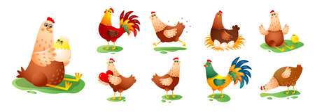 Chicken hen cock in different poses set isolated on white background