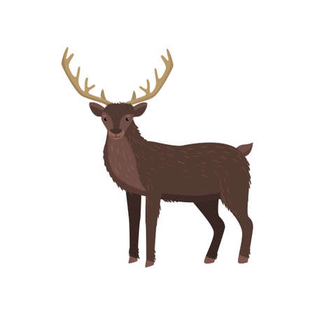 Brown elk with big horns standing at white background looking at viewer 写真素材 - 119918171