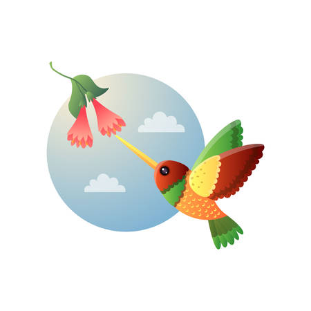 Motley small hummingbird with bright colorful plumage flying to bell-flower. Tropical tiny bird cartoon character collecting nectar from exotic bloomy plant. Round picture isolated on white background