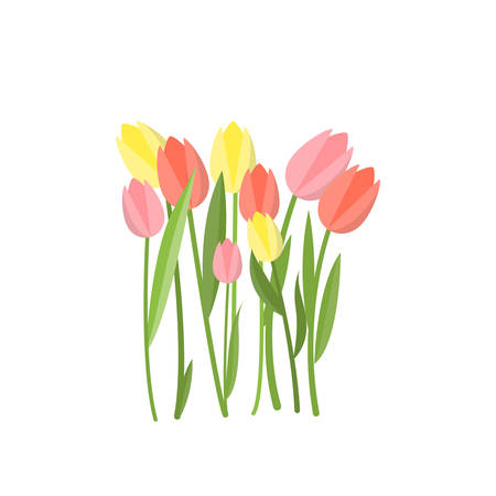 Yellow and pink tulips growing in flowerbed garden on empty background. Beautiful floral composition. Cartoon buds, leaves, stems. Greeting card gift icon template spring summer sticker