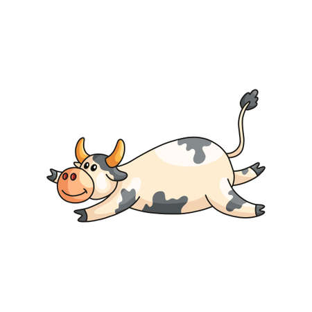 Funny satisfied lazy spotted cow lying on stomach isolated on white