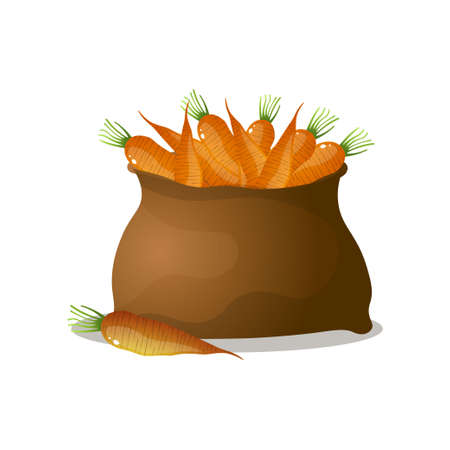 Full brown sack of orange, fresh, eco carrots from natural farm. Cartoon style. Vector illustration on white background