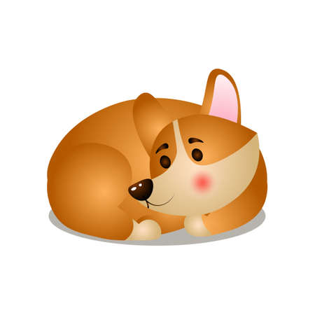 Cute corgi dog sleeping in room corner in circle