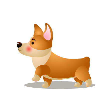 Cute puppy corgi dog is walking strong on street