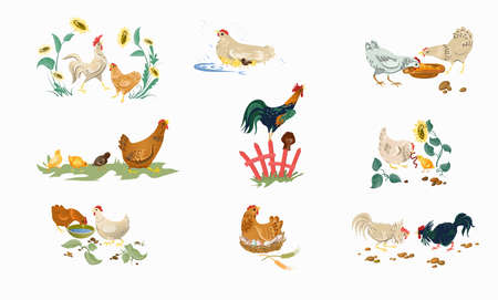Set of farm or home chickens bird with rooster eating  イラスト・ベクター素材