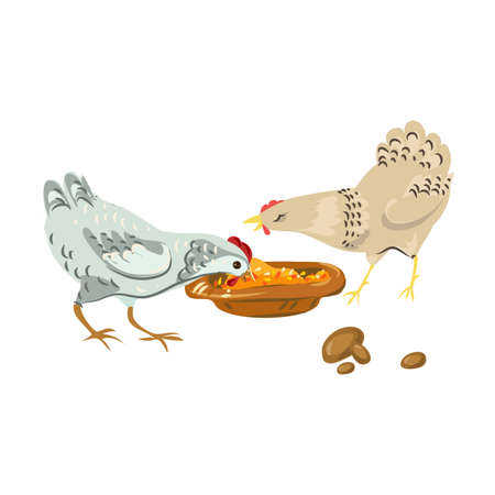 Cute farm chickens eating eco natural grains food. Cartoon style. Vector illustration on white background Ilustração
