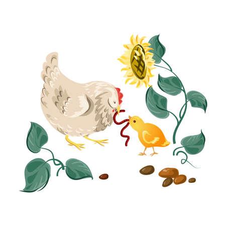 Farm white hen give ground worm to chicken kid. Cartoon style. Vector illustration on white background Illustration