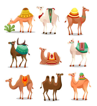 Camel Icons Set . Raster illustration in flat cartoon style