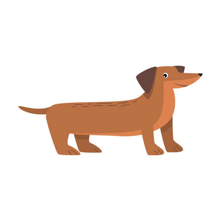 Dachshund dog. Raster illustration in flat cartoon style