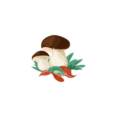 Wild boletus on white feet with a brown cap in growing grass with leaves in nature. Forest mushrooms in autumn. Isolated vector icon illustration on white background in cartoon style.