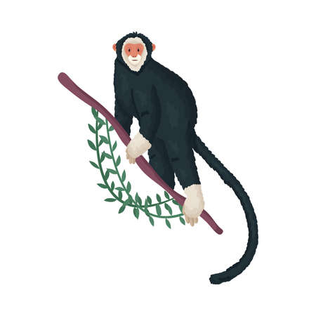 Cute tropical black monkey with a white face on a branch. Vector illustration isolated on white background