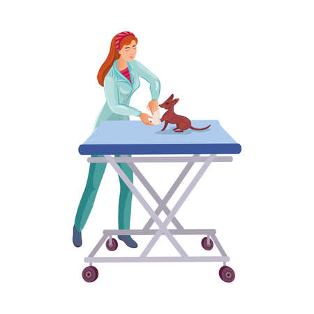 Red-haired veterinary doctor bandaging a paw to a cute small dog on the table in the vet clinic. Isolated vector illustration on white background in cartoon style Illustration