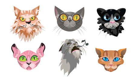 Collection set of colorful different cute cat faces brown siamese, red fluffy, golden red, smokey grey short-haired, black fluffy, Meowing grey. Icons set on a white background in cartoon style.