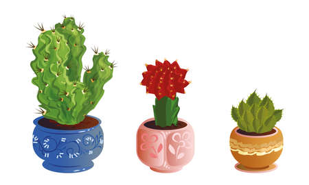 Collection set of three decorative cactuses in pots with spines and blooming flowers. Exotic home plant concept. Colorful vector flat isolated icons set on white background.