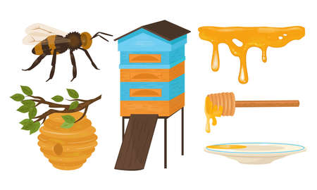 Set of isolated hand drawn different objects and stages for honey production over white background vector illustration. Homegrown plants concept