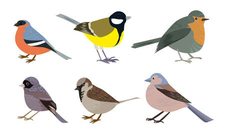 Set of Different types of small city birds vector illustration