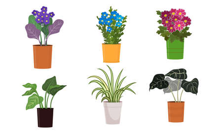 Different kinds of green blooming home plants and flowers in pots vector illustration