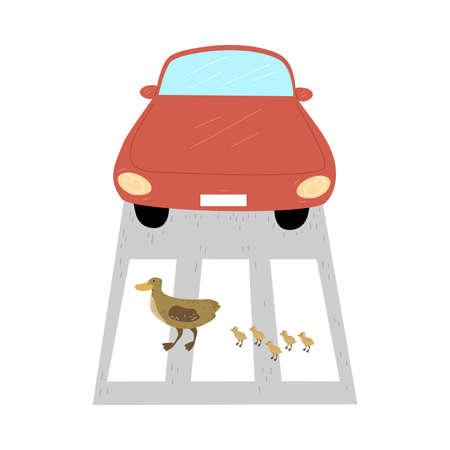 Duck and ducklings crossing road at crosswalk in city